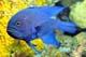 DeepBlueDevilFish